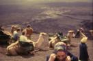 camellos lanzarote (1)