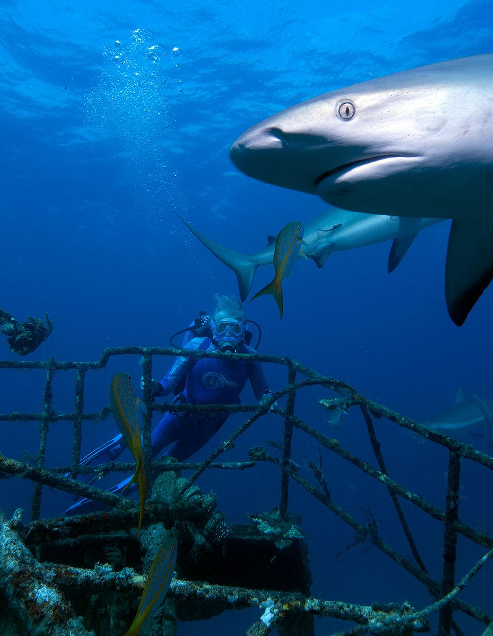 La sexta edición del Festival Arona Son Atlántico finaliza con una proyección de Las Maravillas del Mar