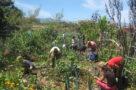 20200108 NP Fotonoviembre-Taller 'Bombas de semillas' y encuentro 'El museo como ecosistema' 3