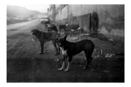 20200127 NP TEA-Ciclo de encuentros 'Diálogos' (Vida de perro, 1990, obra de Teresa Arozena)