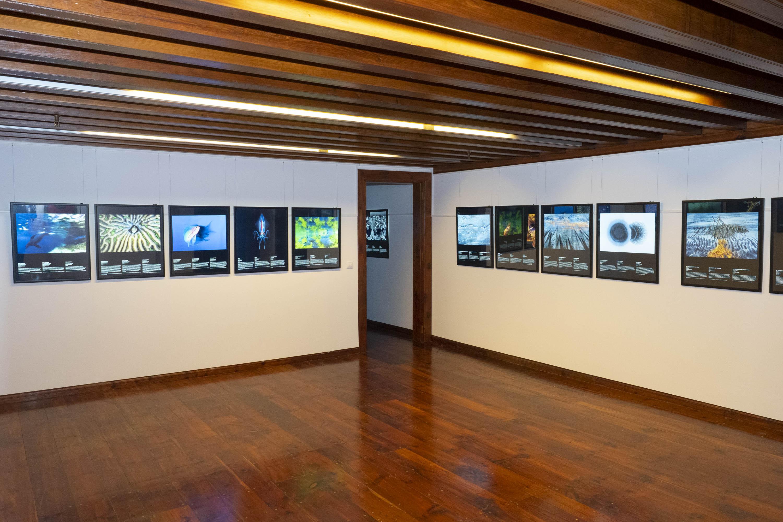 La Fundación CajaCanarias inaugura la exposición Fotógrafos de la naturaleza 2020 en La Palma
