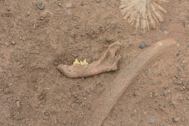 Continúan los trabajos de excavación y estudio del yacimiento de Lomo los Melones