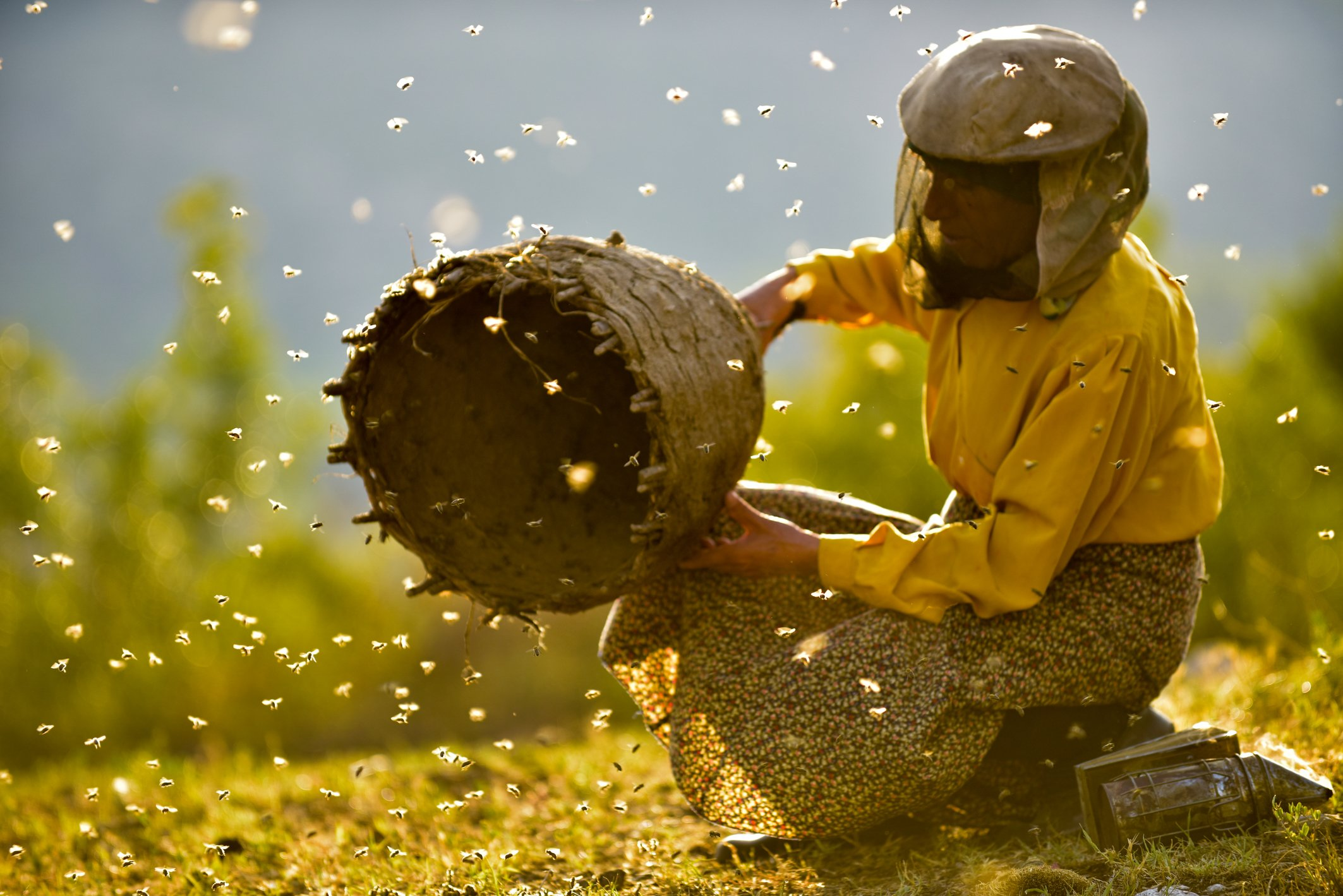 Filmoteca proyecta Honeyland, una historia sobre el frágil equilibrio entre la naturaleza y la humanidad